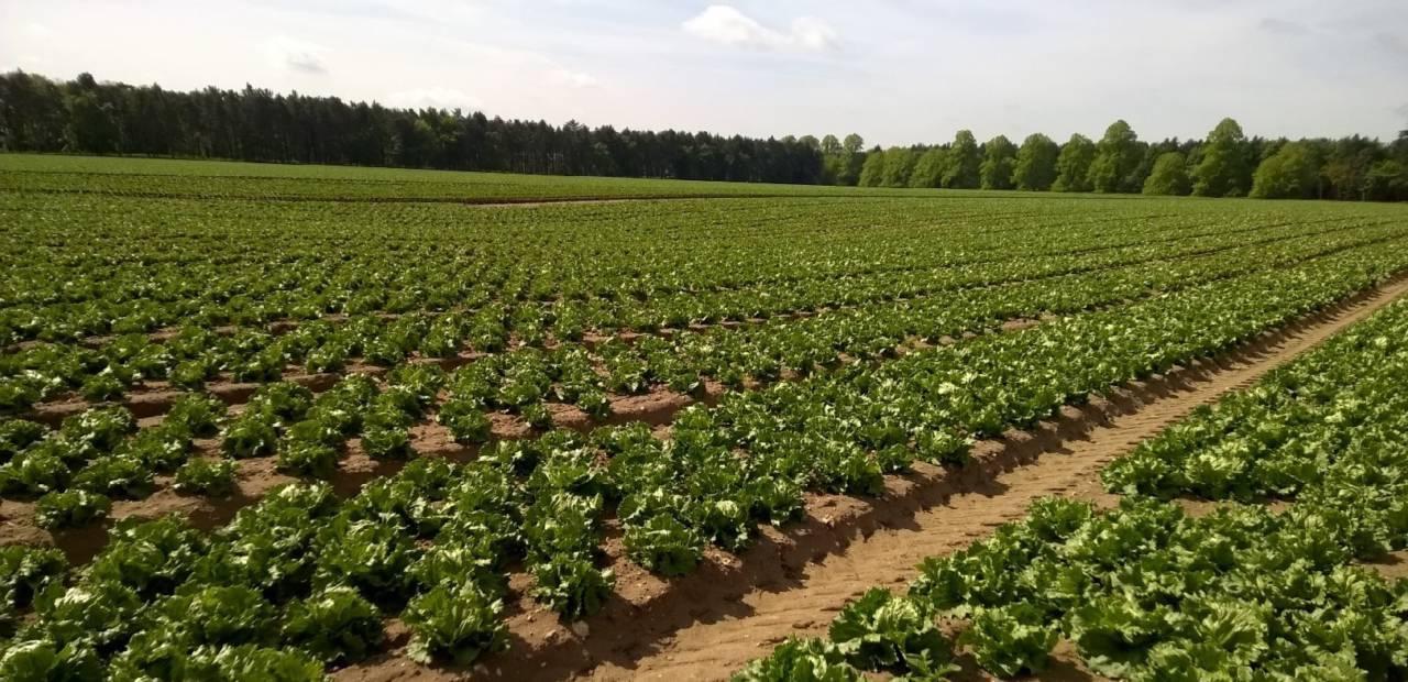 Reforzamos nuestro liderazgo en exportación con la apertura de una plantación en Reino Unido