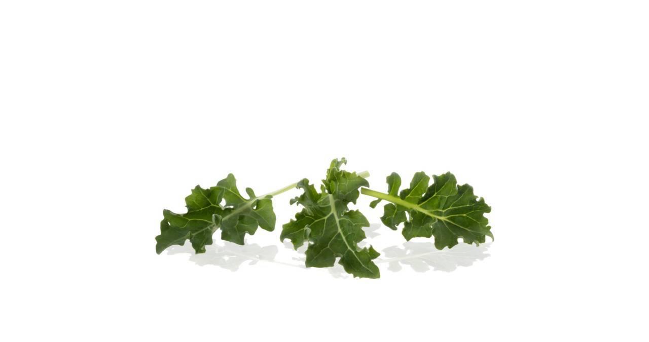 Baby Leaf kale