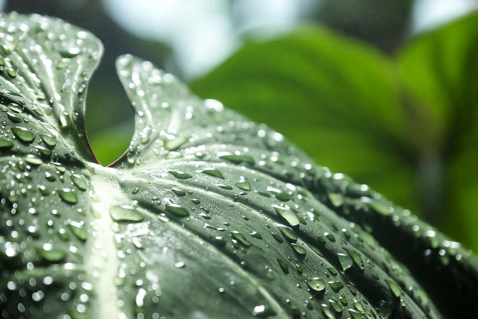 Celebramos el Día Mundial del Agua sumándonos al reto de la agricultura sostenible: reciclar hasta el 100% del agua utilizada