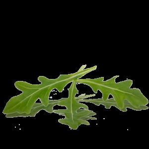 Brote-Rucula