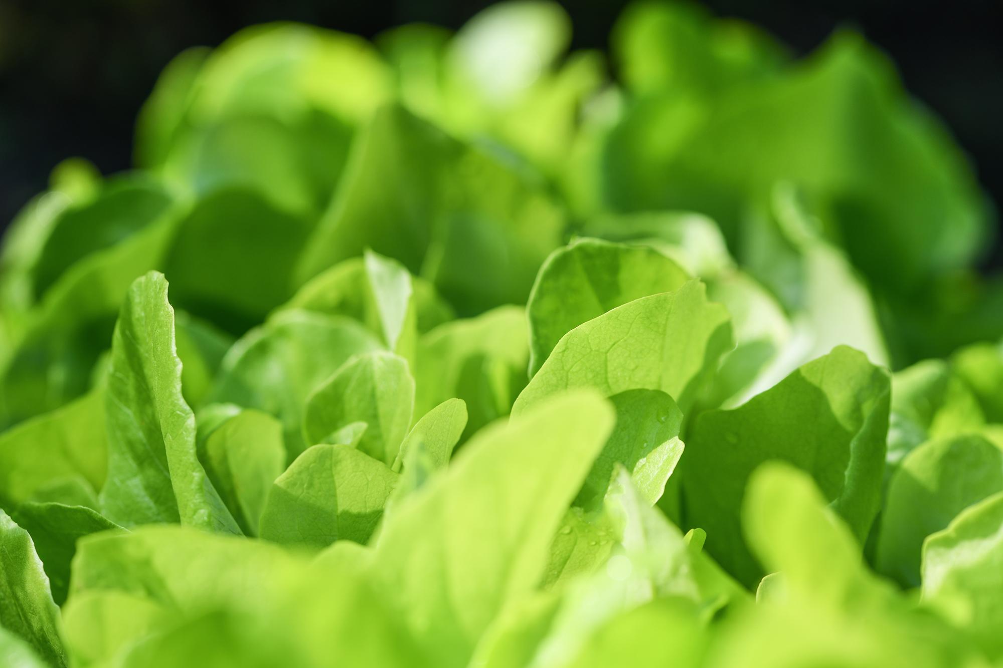Por Que Se Celebra El Dia Mundial De La Alimentacion