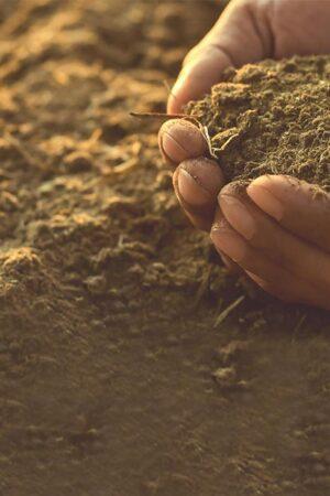 1. Creemos en la tierra como parte de nuestro producto.