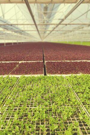 4. Creemos en la tecnología limpia y sostenible.