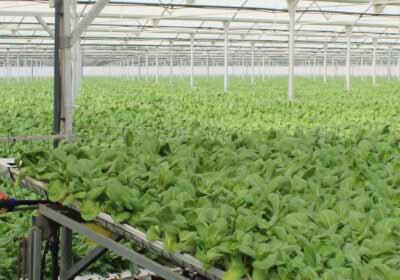 Cultivo hidropónioco Primaflor